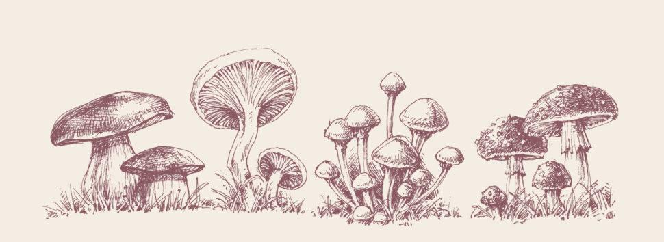 Mushroom Management banner