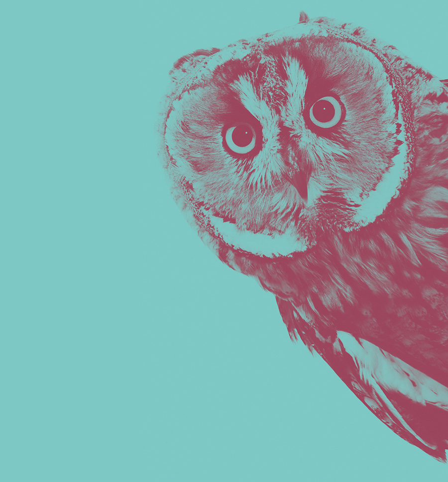 An owl looking at the viewer, in H&H's '50 effective leadership communication strategies from global internal comms experts' blog