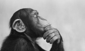 The best kind of boring: if you want to be creative, start being bored. Image 2: content chimp thinking.
